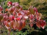 美しい秋の紅葉・黄葉