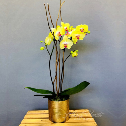 Lovely orchid plant