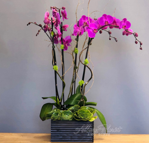 Orchids with succulents