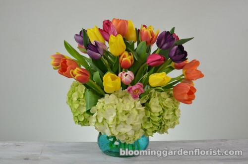 Tulip Garden - V62