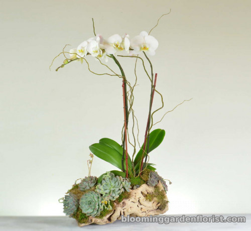 Succulent And Orchid Garden - P35
