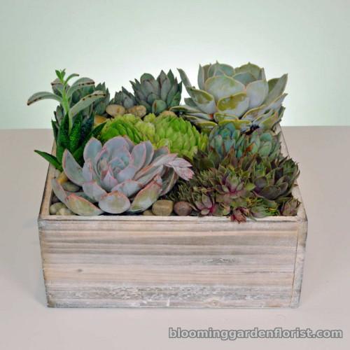 Nature's Gift Box P30