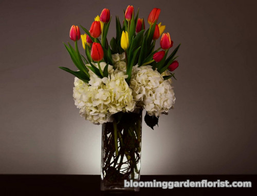 Tulips Rainbow - V60