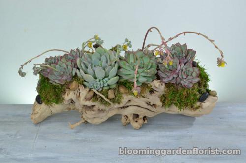 Driftwood Succulent Garden - P36