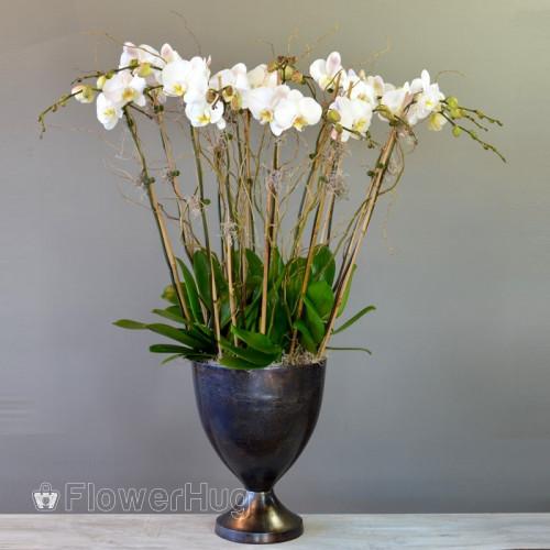 Orchid Magic - P18