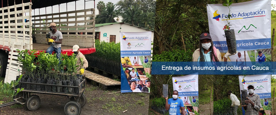 Fondo Adaptación continua entregando insumos agrícolas para apoyar familias productoras en Cauca