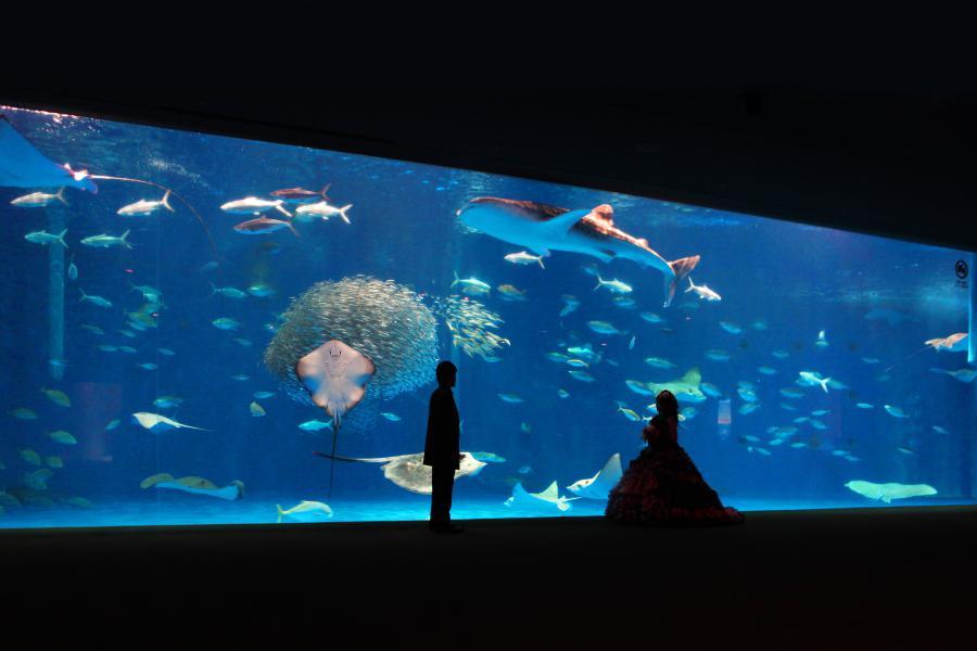 鹿児島県 水族館
