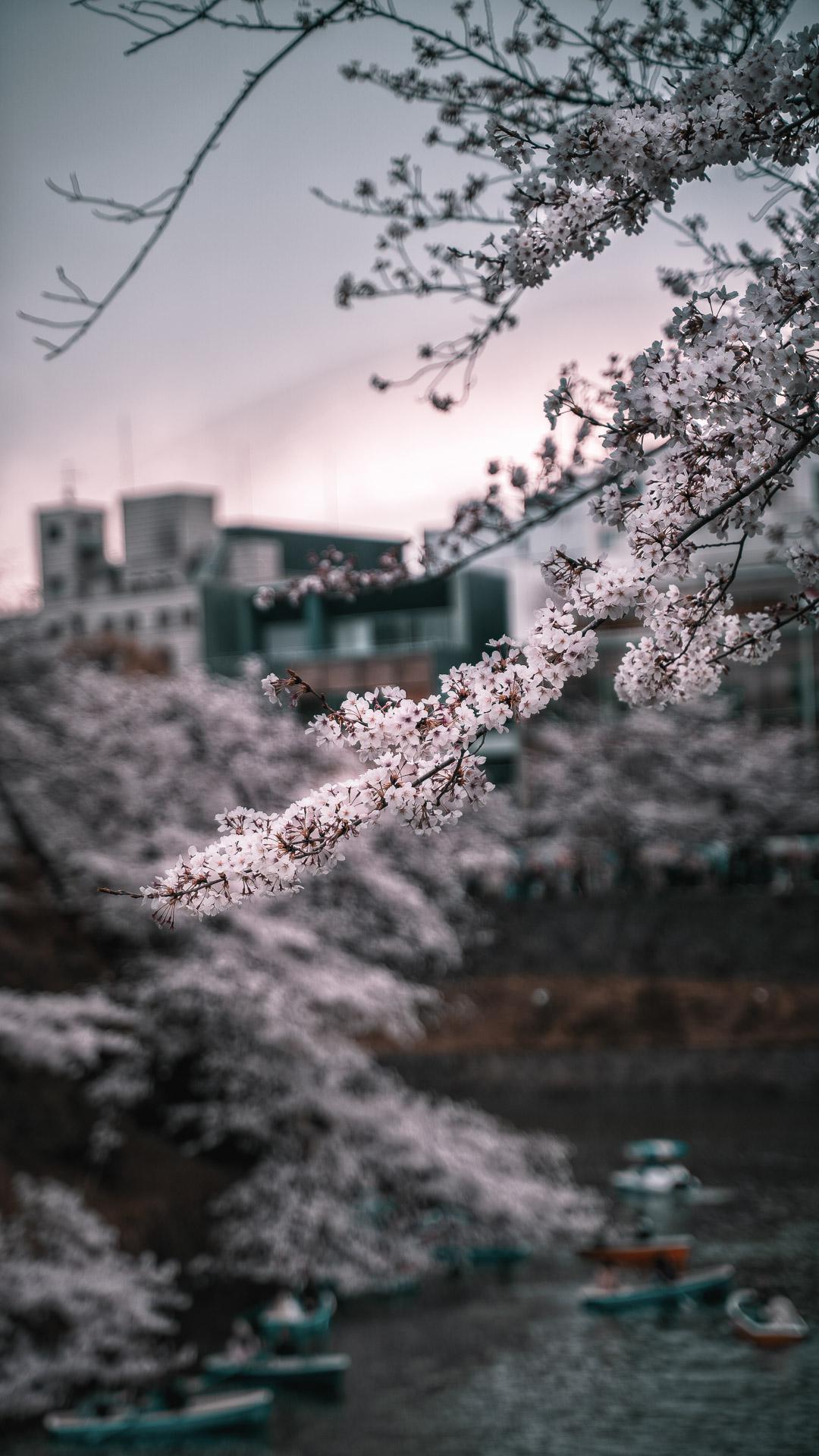 東京都 皇居