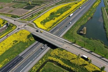 Viaduct in bloei
