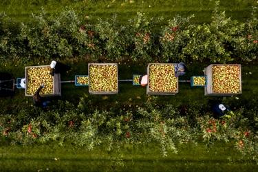 Boomgaard met Elstar appelbomen