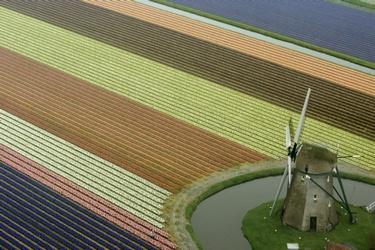 Luchtfoto van de bollenstreek in Lisse