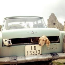 Twee honden in een auto