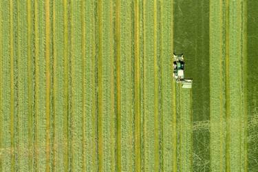 Groen weiland in het voorjaar