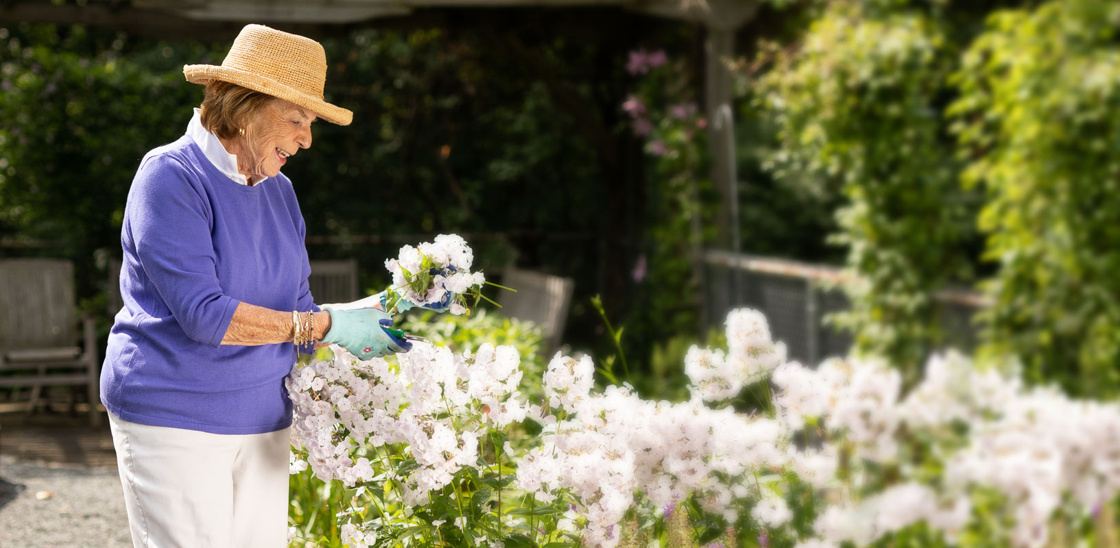 A senior woman collects flowers from her flowerbed