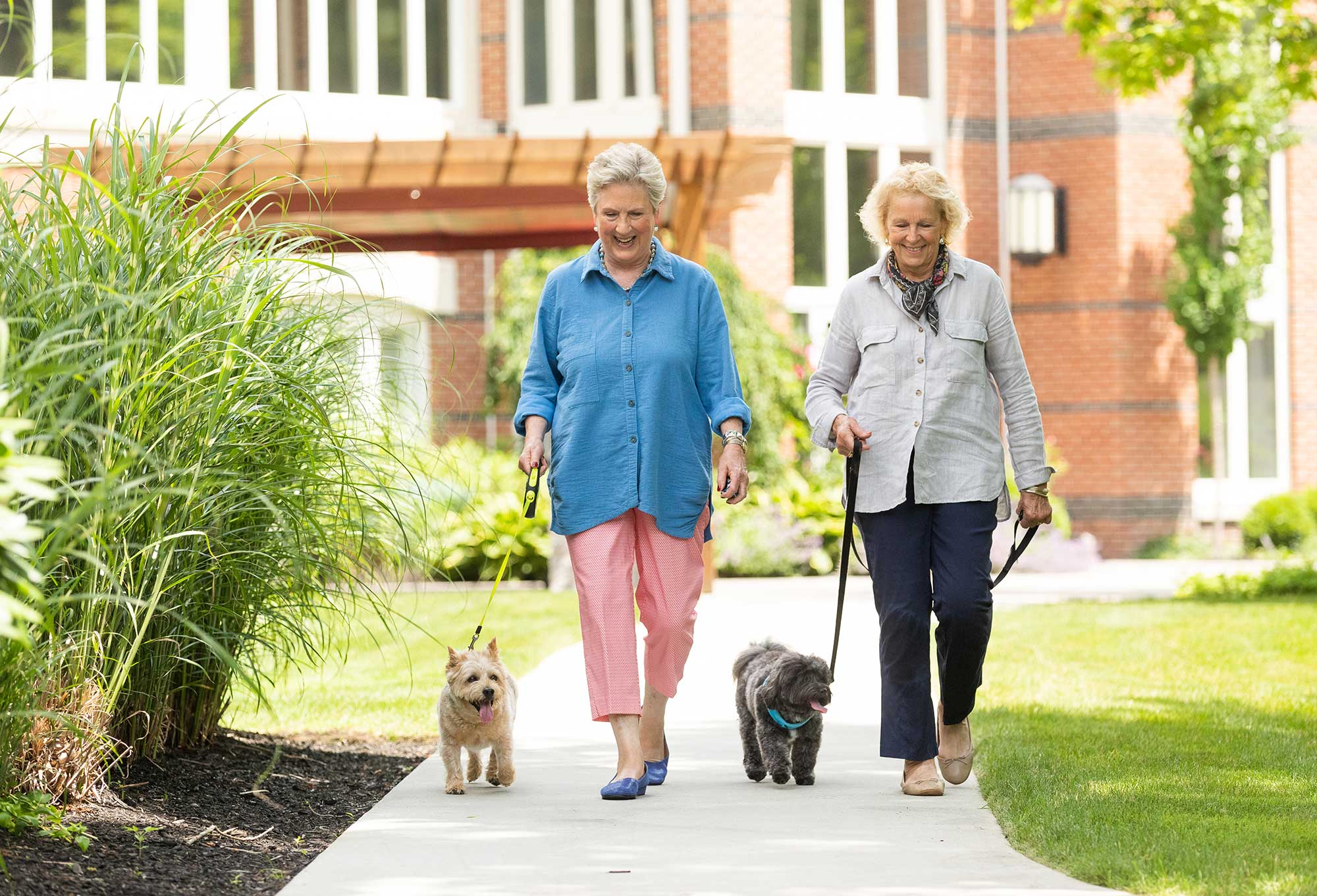 Two senior women walk their dogs