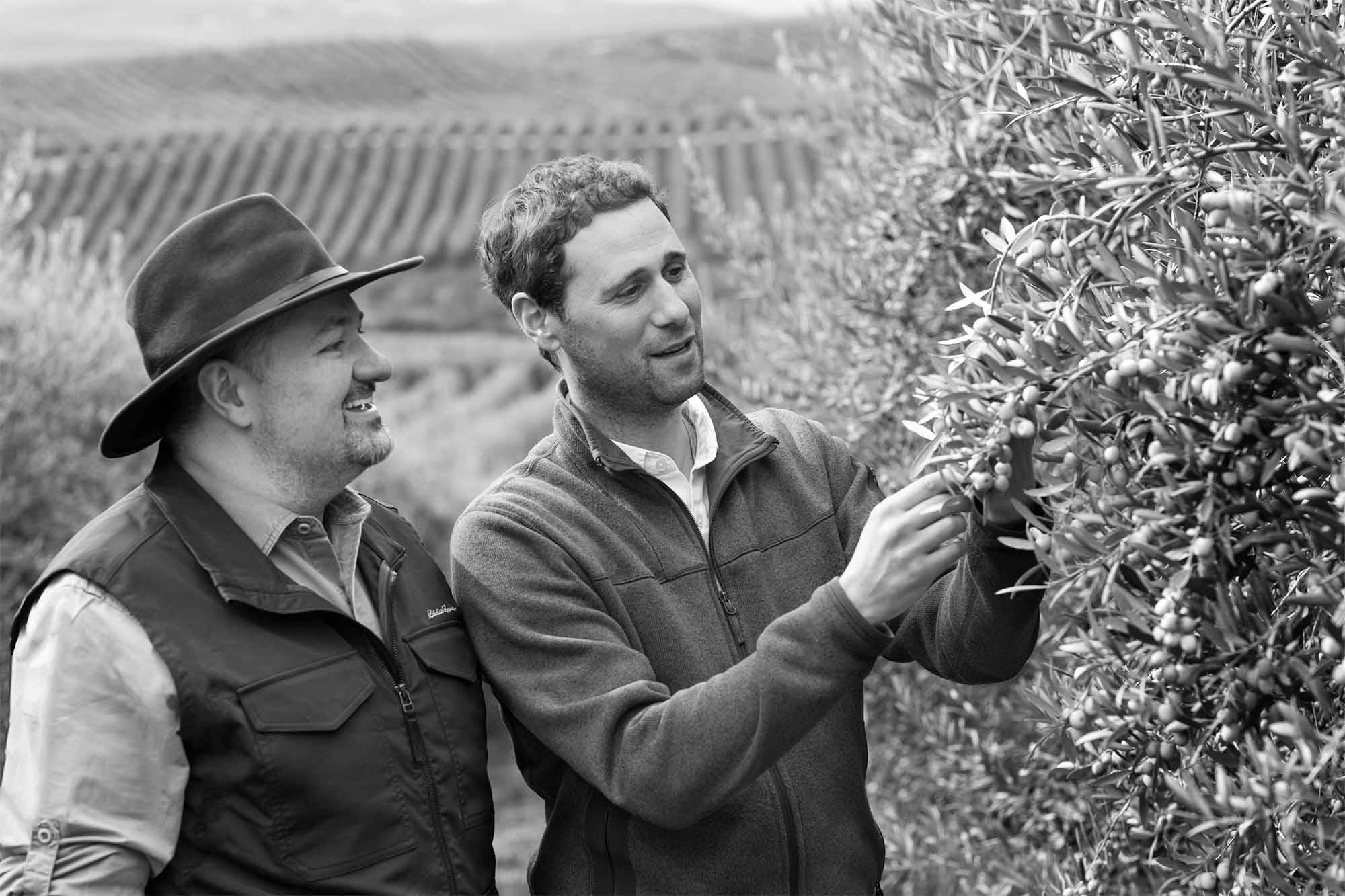 Quarter 2—Chilean Harvest