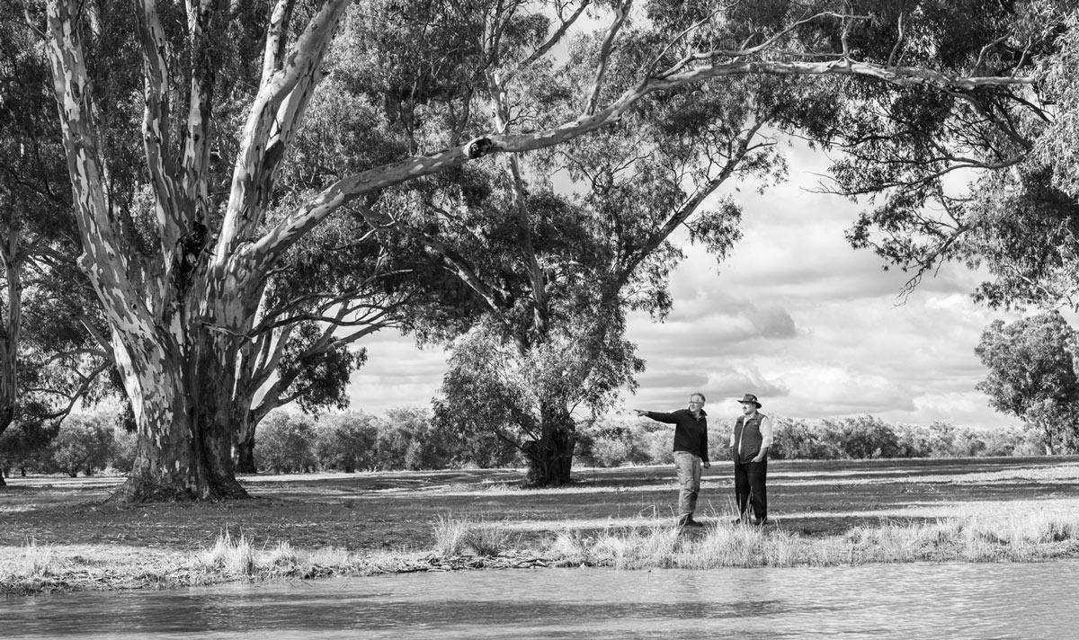 Quarter 3—Australian Harvest