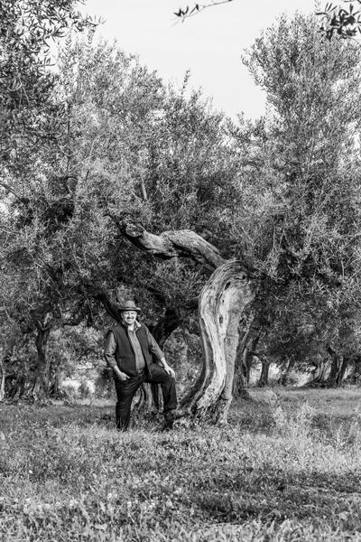 Dritta olive tree