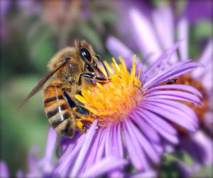Create A Bee-Friendly Garden This Spring