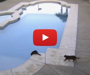 Ninja Cat Has You All Wet With Tears of Laugher