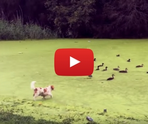 Dog Learns About Water- And It's Adorable!