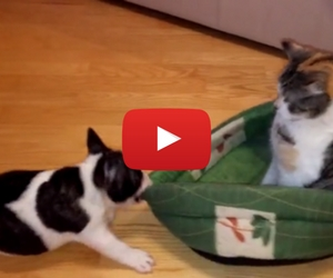 Cat Steals Puppy's Bed