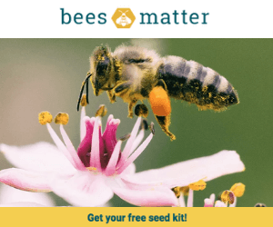 Free Seeds from Bees Matter