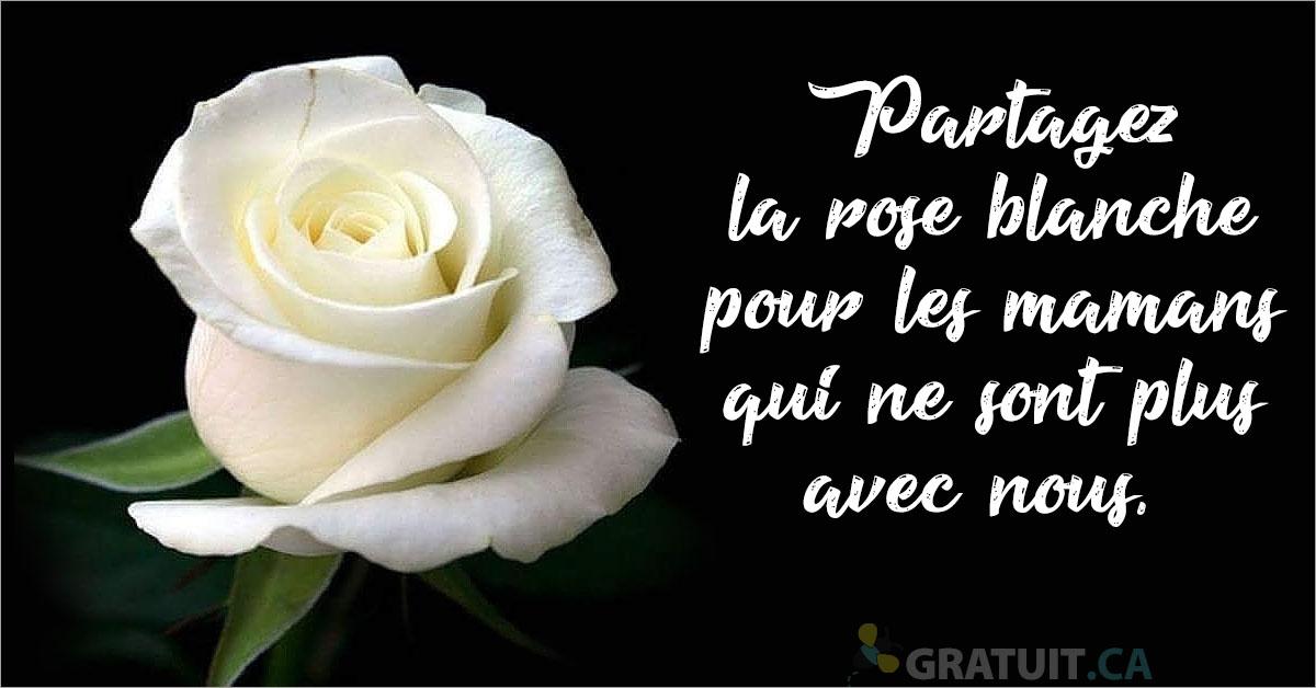 https://storage.googleapis.com/freebies-com/resources/news/21995/partagez-la-rose-blanche-pour-les-mamans-qui-ne-sont-plus-avec-nous.jpg