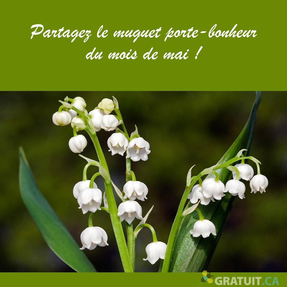 https://storage.googleapis.com/freebies-com/resources/news/25351/partagez-le-muguet-porte-bonheur-du-mois-de-mai.jpg