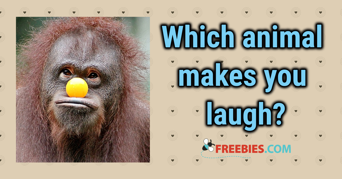 POLL: Which animal makes you laugh?