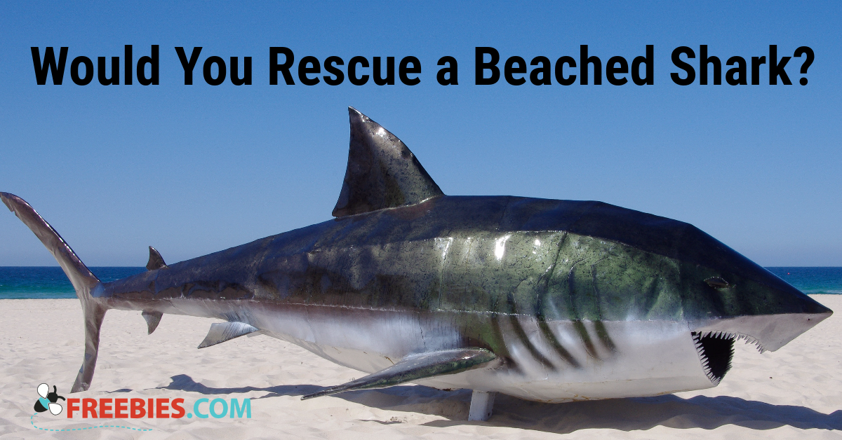 poll would you drag a beached shark back to open waters  vote for 50 points
