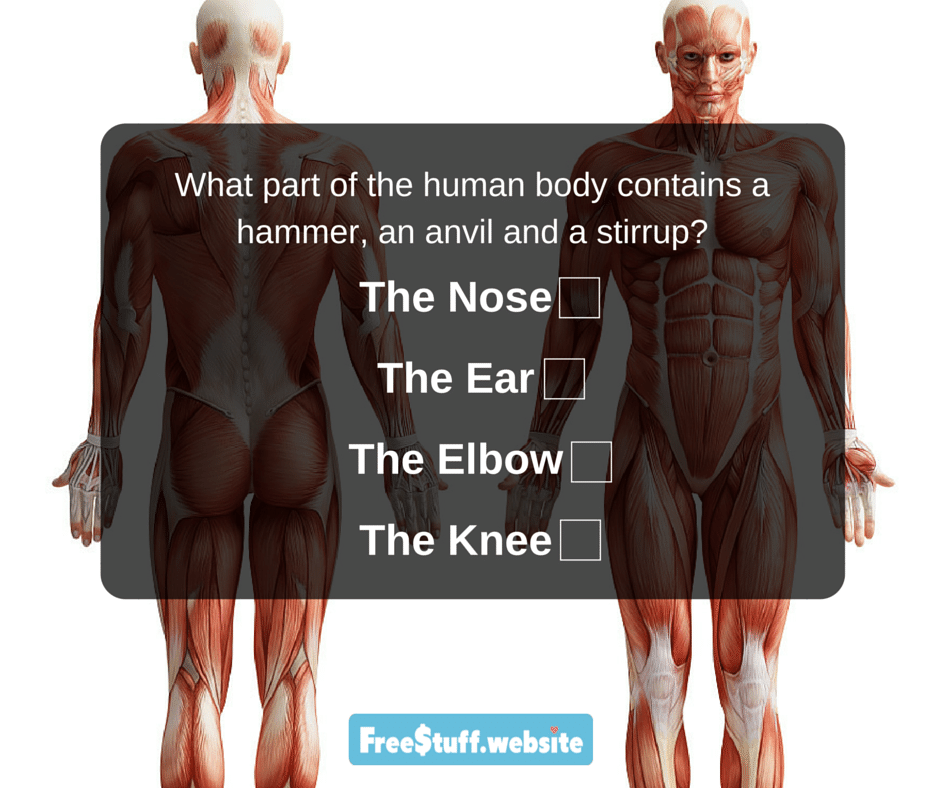 What part of the human body contains a hammer, an anvil and a stirrup?