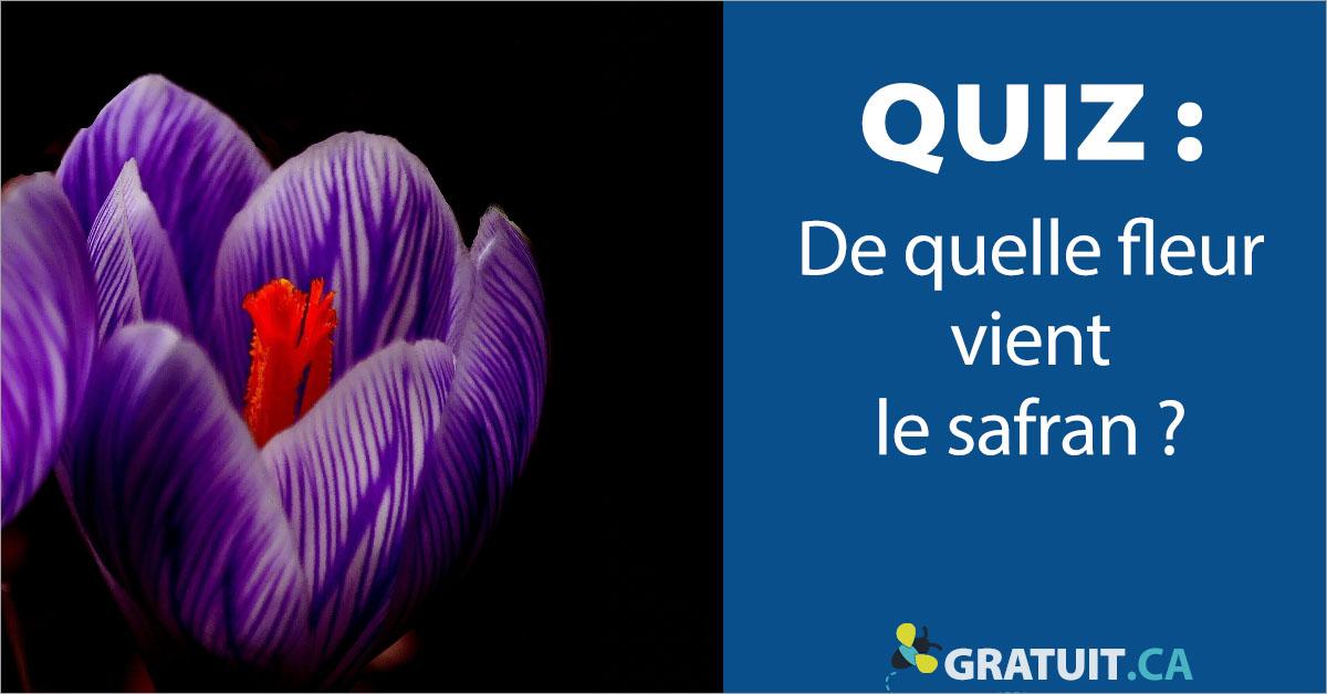 Quiz : De quelle fleur vient le safran?