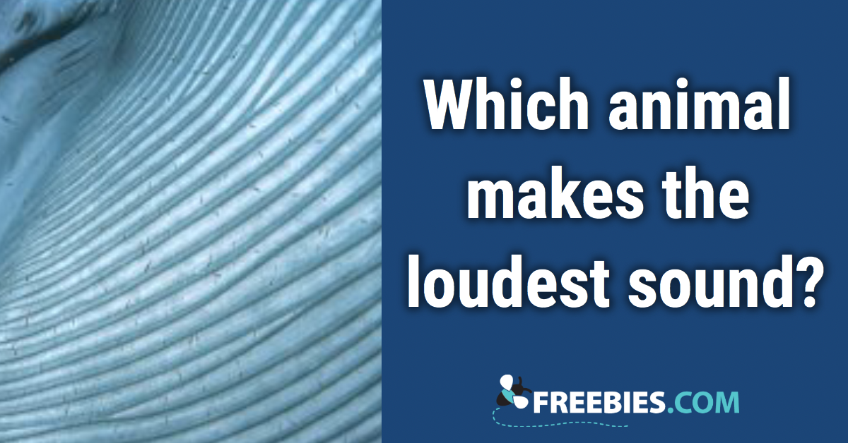 TRIVIA: Which animal makes the loudest sound?