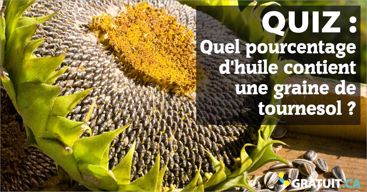 Quel pourcentage d'huile contient une graine de tournesol?