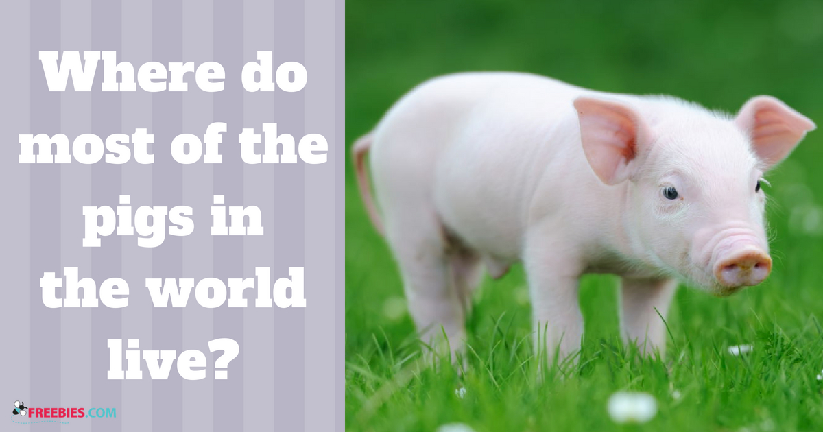 pigs in the world