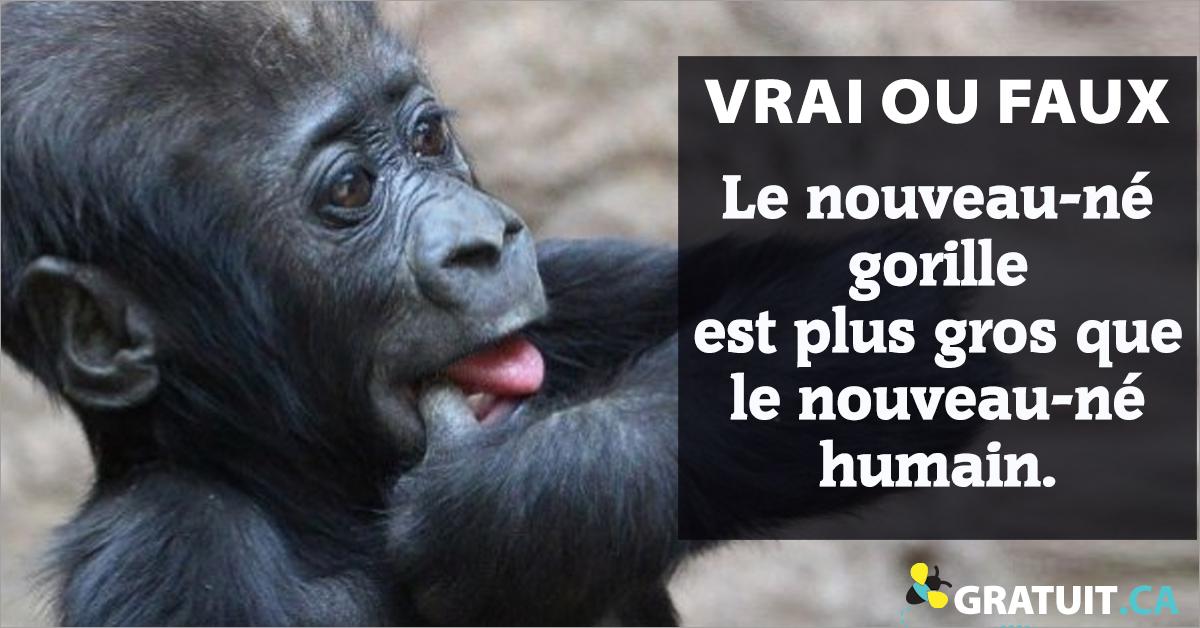 Vrai ou faux : Le nouveau-né gorille est plus gros que le nouveau-né humain.