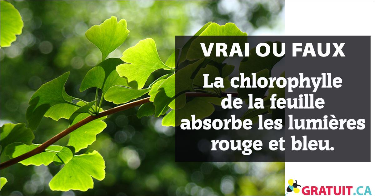 Vrai ou faux :  La chlorophylle de la feuille absorbe les lumières rouge et bleu.