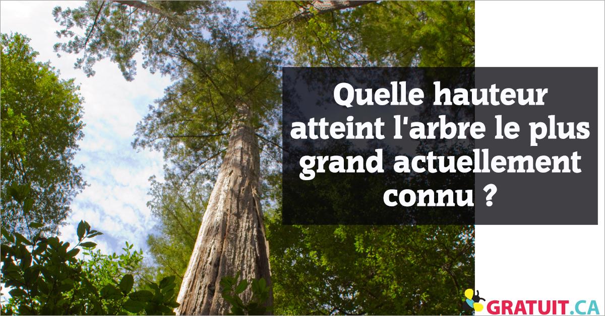 Quelle hauteur atteint l'arbre le plus grand actuellement connu?