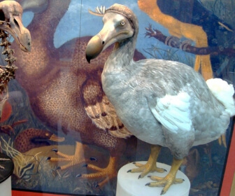 https://storage.googleapis.com/freebies-com/resources/quiz/1685/what-country-did-the-dodo-bird-live-in-.jpg