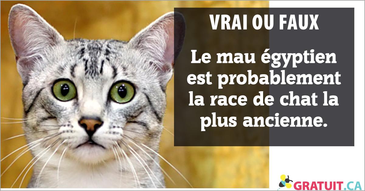 Vrai ou faux : Le mau égyptien est probablement la race de chat la plus ancienne.