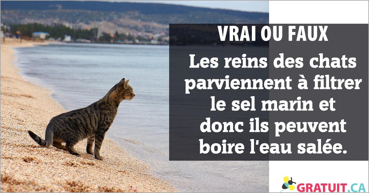 Vrai ou faux : Les reins des chats parviennent à filtrer le sel marin et donc ils peuvent boire l'eau salée.