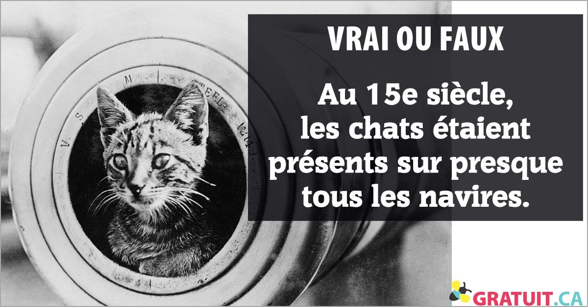 Vrai ou faux : Au 15e siècle, les chats étaient présents sur presque tous les navires.