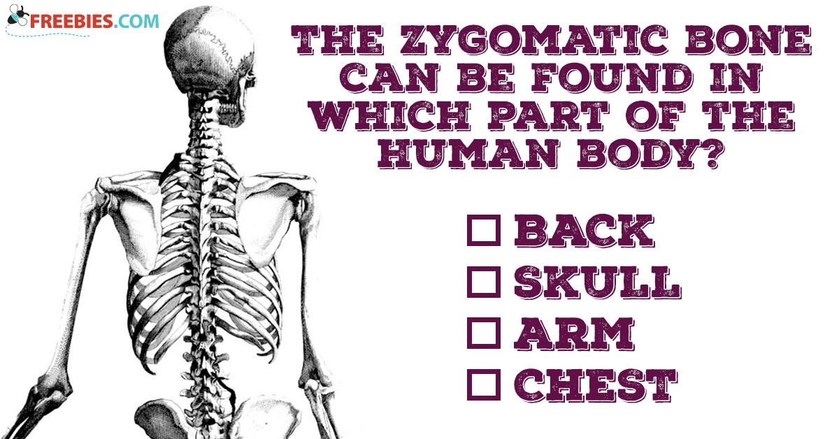 Where Is Your Zygomatic Bone?