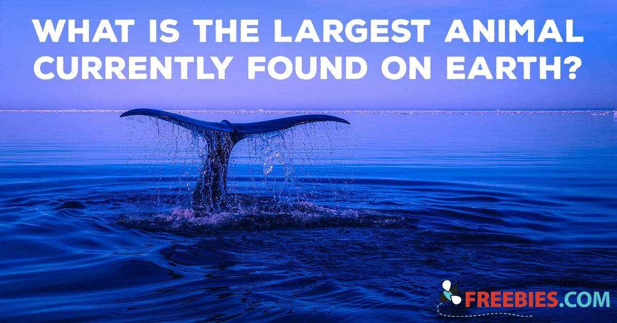 TRIVIA: What is the Largest Animal Currently Found On Earth?