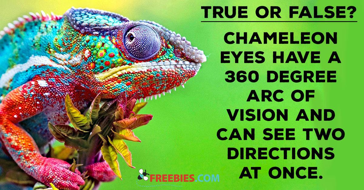 TRIVIA: Chameleon True or False