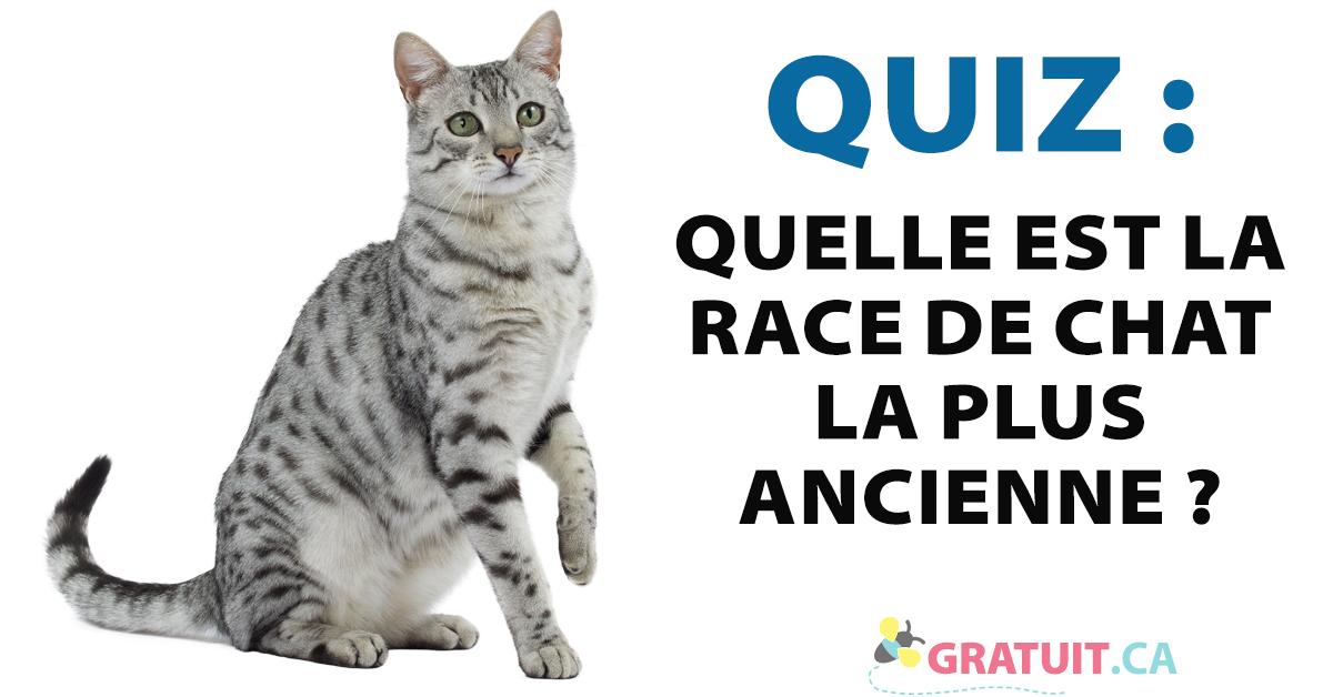 Quiz : Quelle est la race de chat la plus ancienne?