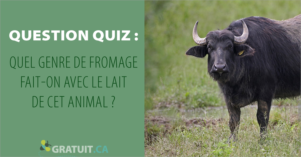 Question Quiz : quel genre de fromage fait-on avec le lait de cet animal?