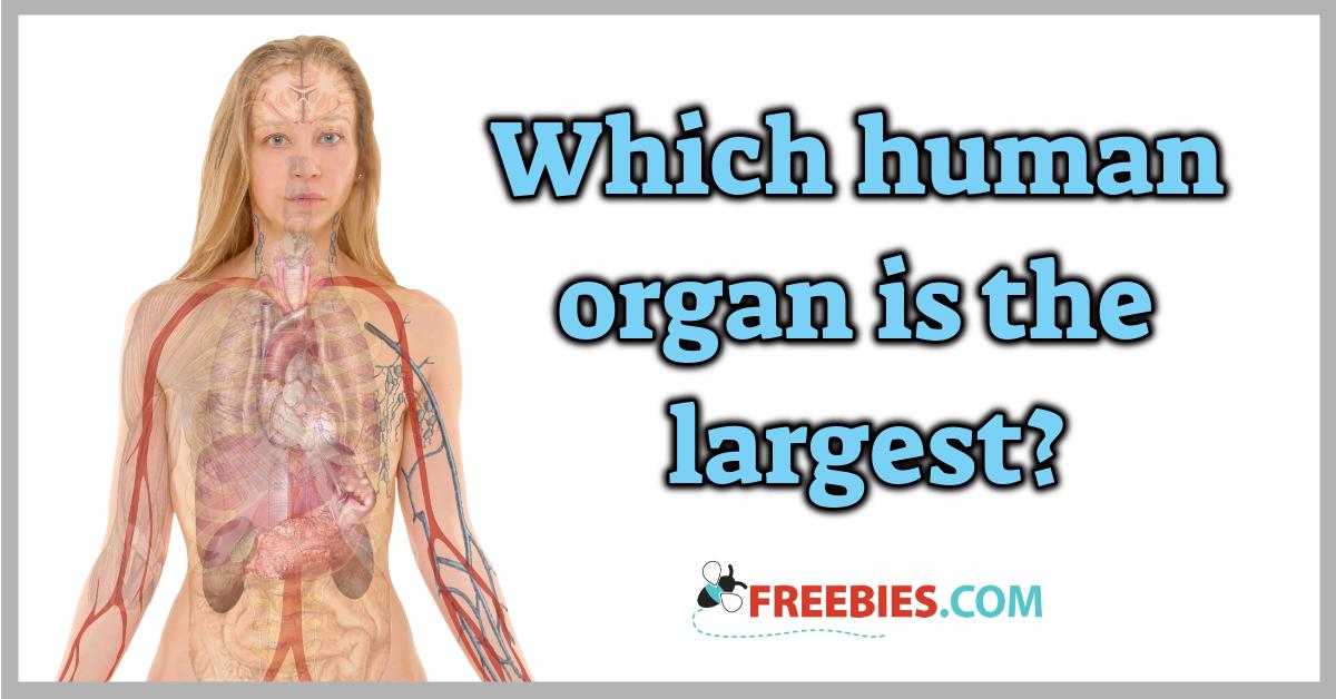 TRIVIA: Largest human organ?