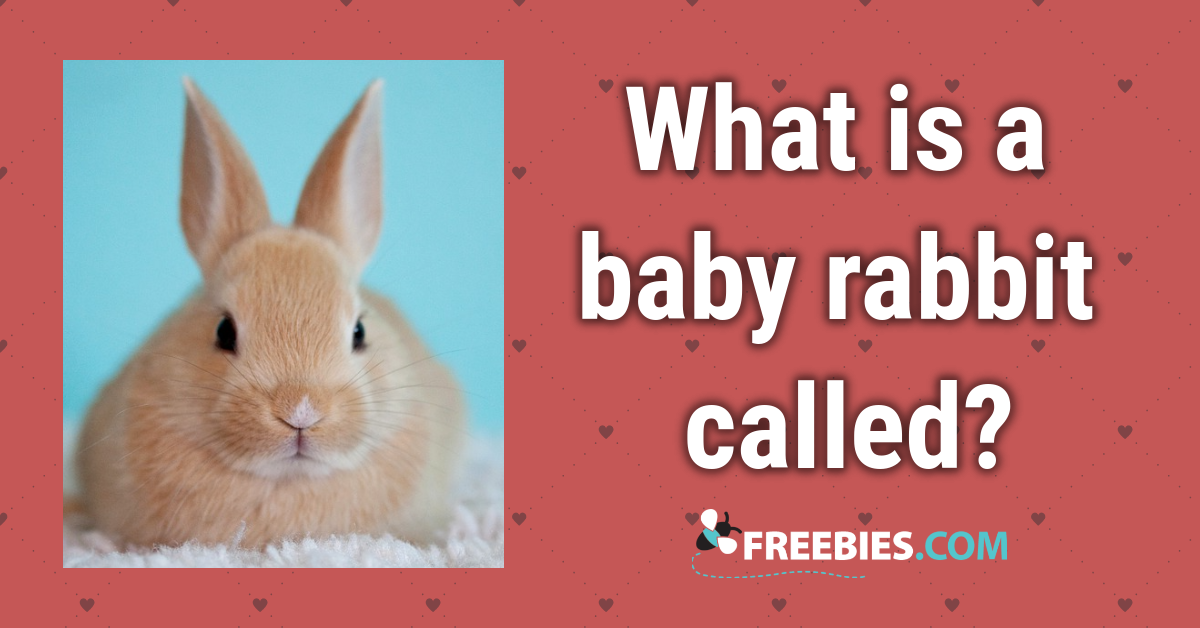 TRIVIA: What is a baby rabbit called?